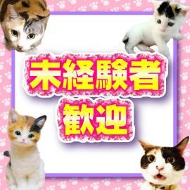 キティーズテラス 渋谷店の求人情報画像12