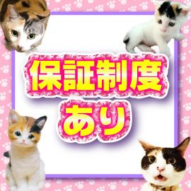 キティーズテラス 渋谷店の求人情報画像11