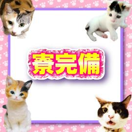 キティーズテラス 渋谷店の求人情報画像8