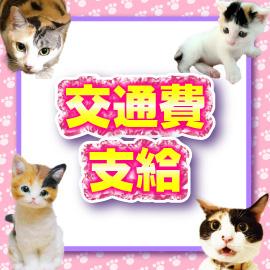 キティーズテラス 渋谷店の求人情報画像7