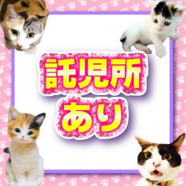 キティーズテラス 渋谷店の求人情報画像4
