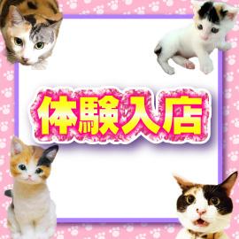キティーズテラス 渋谷店の求人情報画像3