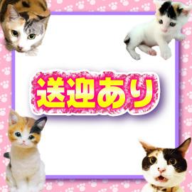 キティーズテラス 渋谷店の求人情報画像1